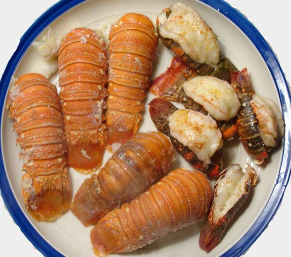 Cooked Mini Lobster Tails