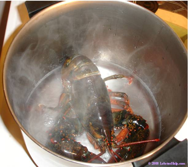 Steaming Lobster 5