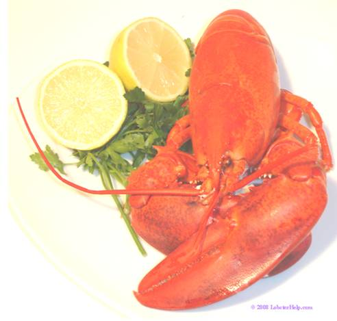 Steaming Lobster 9